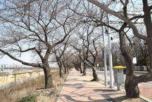 제12회 영등포 여의도 봄꽃 축제