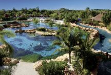 Discovery Cove Orlando / Discovery Cove Orlando. SeaWorld's premiere park.