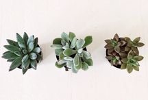 home sweet home | plants / by Dorothy Lei