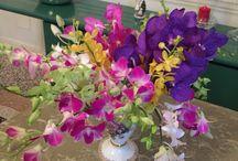 I miei fiori / Vasi di casa mia