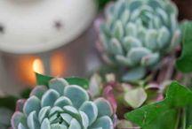 Succulent s