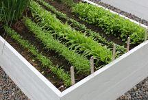 Gemüse-Garten - Potager