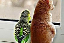 unlikely friendships / love knows no barriers