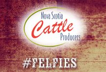 Nova Scotia Cattle Producers / Love your food? Meet your Canadian Beef farmers  in Nova Scotia.