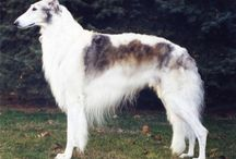 Coolest Pet Breeds / There are amazing breeds of animals, which have been selected for different attributes.  These are some of the interesting results