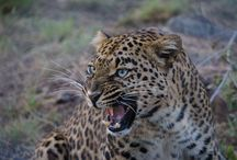 #LivingTheDream / Safari holidays are a dream for many, a reality for our guests.