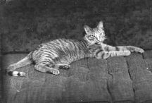 Cats in Historical Photographs / Historical photos of cats