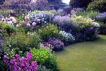 Gardens / Plants and garden designs