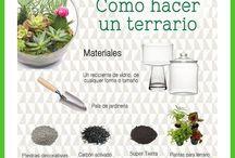 Terrarios / Como realizar nuestro propio terrario