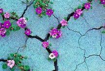 Secret garden / ☘️