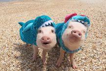 Piggies in a blanket