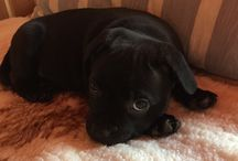 Dog / Suzy