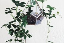[ Plants ]