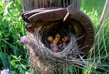 Bed and Breakfast for Birds