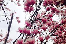 Beauty Flowers / Flowers