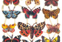 Lepidoptera / A collection of butterflies & moths; winged creatures of wonder.