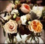 Instagram shots / Flower Photos from Instagram