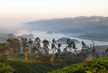 Travel: Sri Lanka & India / Places to go, to eat and to see in the beautiful south Asian countries of Sri Lanka and India.