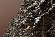 Sne / Jul