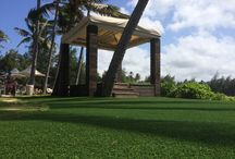 SYNLawn at Turtle Bay Resort / We're proud to have installed our turf at the famous Turtle Bay Resort on the North Shore of Oahu, Hawaii.