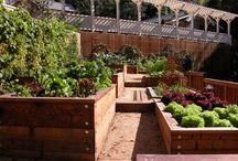 Plante, dyrke, spire!