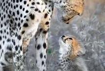Pawsome animals