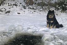 Talvista maalaiselämää country life wintertime / avanto lumi jää talvi maaseutu koira suomenlapinkoira winter Finland snow ice dog puutarhablogi