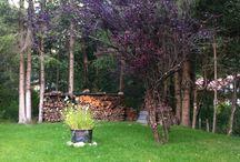 Progressi del giardino
