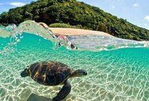 Bucket List ~ Hawaii / by Michelle Neuenschwander