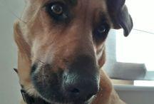 pets :) / my best frend :) Ruda #pets #dogs #clockwoodstudio #dog #etsyshop #artmastudio