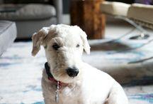 *Puppy Love* / by Haley Carpenter