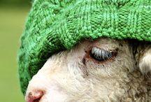 En image / Autour du tricot et de la laine.