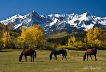 Colorado Favorites / Whether you're planning a small family vacation or a large conference, the Durango area provides a memorable experience that is unique to southwest Colorado