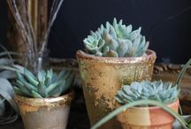 garden | cacti and succulents