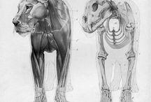 cientific illustration - animals / Land mammals.