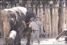 Elefanți