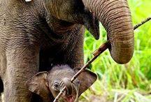 Elefanti e altri animali