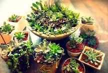 自作の植物寄植えなど / 自作の寄せ植え、タブローなど