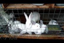 Rabbits / All about raising for meat
