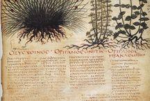 nature studies+ Haeckel