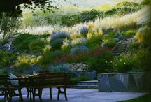 yard ideas / by Kira Heward