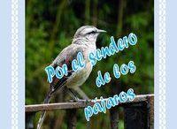 libro de micro y nano  cuentos con imagenes de pájaros del Noreste Argentino