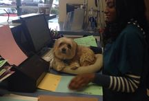 Value Pet Clinic: Renton / Photos taken at out Renton clinic. Located at: 3901 NE 4th Street Renton Wa 98056