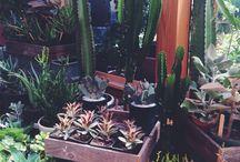 || plants ||
