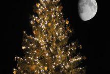 Christmas Tree, Oh Christmas Tree / by Barbara Burns
