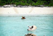 Vay Cay