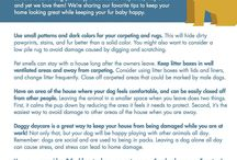 Pet Tips for Your Home / We love your fur babies! Here are some of our favorite tips to protect your home and keep it safe for your four-legged family members.