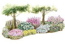 Garden Design Plans / by Rissa Huntley