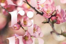 春 デザイン