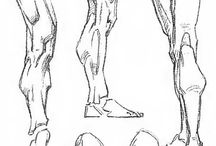 ANATOMY: LEGS